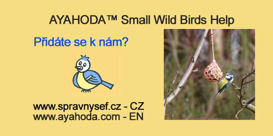 ayahoda small wild birds help