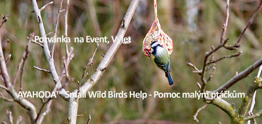AYAHODA Small Wild Birds Help Pomoc malym ptackum
