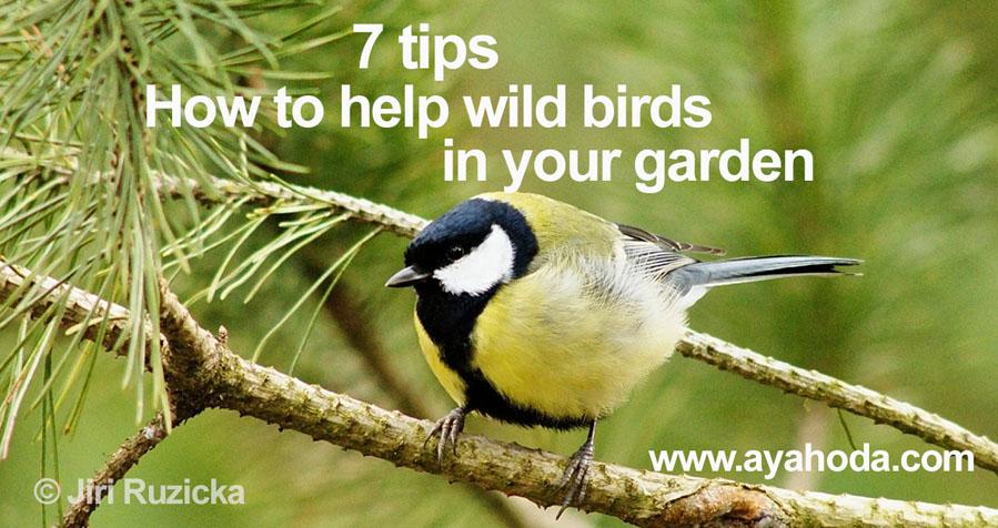 jak pomoci ptakum na zahrade
